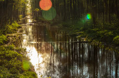 Bialowieza forest in Poland Stock Images