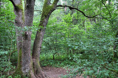 Bialowieza National Park royalty free stock photos
