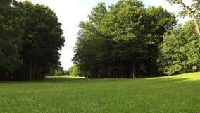 Bialowieza Niederlassungen und Stamm der laubwechselnden Eiche, König des Waldes im Undercoat von Bäumen Stockbild