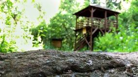 Bialowieza-Ort der Energie Eine Ansicht aus der Perspektive des Energiesteins zu den Aussichtstürmen und zum Wald Stockfoto