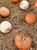 Bianco, arancia e zucche della pesca trovi in cima ad un pavimento di fieno fotografie stock