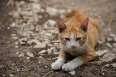 Bianco arancio del gattino sveglio del gatto fotografie stock libere da diritti