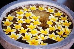 Bianco con i fiori gialli in acqua. Fotografie Stock