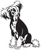 Bianco crestato cinese del nero del cane Fotografia Stock