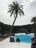 Bianco degli azzurri della pietra dell'acqua della palma Fotografia Stock