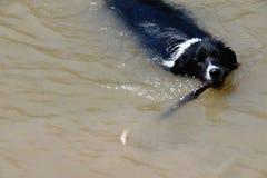 bianco del cane nero Immagini Stock