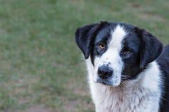 bianco del cane nero immagine stock
