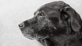 bianco del cane nero Fotografia Stock Libera da Diritti