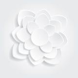 Bianco del fiore Fotografia Stock Libera da Diritti