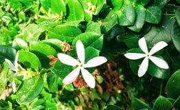Bianco del fiore immagine stock