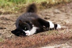 bianco del gatto nero Fotografie Stock Libere da Diritti