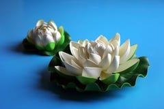 Bianco del loto Fotografie Stock Libere da Diritti