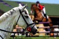 bianco del ritratto del cavallo Fotografia Stock