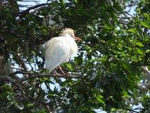 Bianco del solitario che birding sedendosi di mattina sole immagine stock libera da diritti