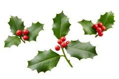 Bianco di Holly With Red Berries On di Natale Fotografia Stock Libera da Diritti