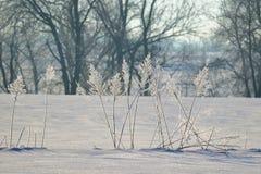 Bianco di inverno Fotografia Stock Libera da Diritti
