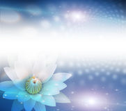 Bianco di Lotus Fotografia Stock