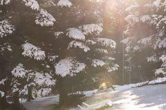 Bianco di trentino di inverno della neve e verticale di legno Fotografie Stock Libere da Diritti