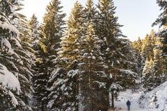 Bianco di trentino di inverno della neve e verticale di legno Fotografia Stock Libera da Diritti