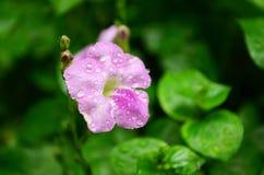 Bianco e fiore moisted viola immagini stock libere da diritti