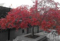 In bianco e nero e rosso fotografia stock libera da diritti