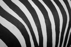 In bianco e nero a strisce Fotografia Stock Libera da Diritti