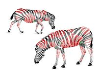 In bianco e nero a strisce della zebra con le rose rosse illustrazione vettoriale