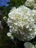 Bianco e selvaggio Fotografie Stock