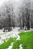Bianco e verde fotografia stock libera da diritti