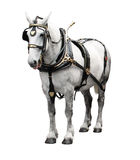 Bianco elegante del cavallo Fotografie Stock
