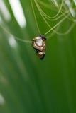 Bianco marrone della farfalla sulla foglia della palma Fotografia Stock Libera da Diritti