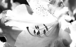 Bianco profondo Fotografie Stock Libere da Diritti