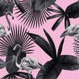 Bianco senza cuciture del nero del cerchio del fondo del fenicottero delle foglie tropicali Fotografie Stock Libere da Diritti