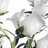 Bianco su bianco Immagini Stock