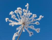 Bianco sul blu Fotografie Stock
