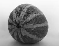 Bianco tailandese del nero del melone del cantalupo Fotografia Stock Libera da Diritti