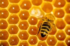 Biarbete på honungskakan Fotografering för Bildbyråer