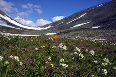 Biarmia Anemone Στοκ εικόνα με δικαίωμα ελεύθερης χρήσης