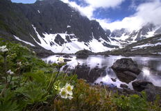 Biarmia da anêmona perto do lago da montanha Imagens de Stock