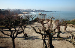 Biarritz. Southern France Tamarisk Trees Stock Photography