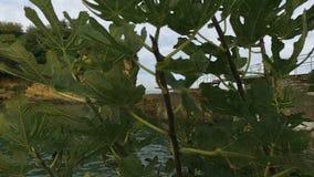 Biarritz, DES Pêcheurs 14 do porto de Allée vídeos de arquivo