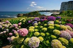 biarritz kwiaty Obrazy Royalty Free