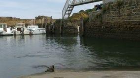 Biarritz lento, DES Pêcheurs 13 del puerto de Allée metrajes