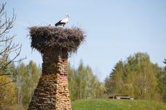 biały gniazdowi bociany Zdjęcia Royalty Free