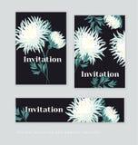 Biały jesieni chryzantemy kwiatu karty szablon Fotografia Royalty Free