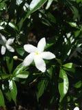 Biały kwiat, zamyka up Fotografia Royalty Free