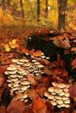 biały odosobnione las pieczarki Obraz Stock