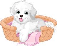 Biały puszysty pies Obrazy Royalty Free