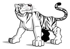 Biały tygrys Zdjęcie Royalty Free