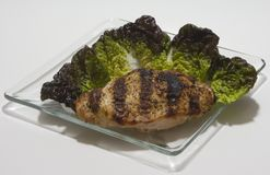 Bib Lettuce Salad with Grilled Chicken Royalty Free Stock Photography